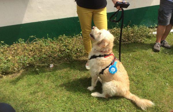Teaching dog & handler